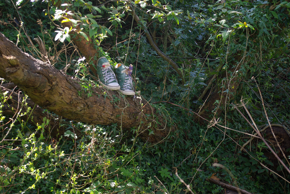 The bottom of a tree trunk gets lost within ivy, and the ivy creates a bed upon the ground for light to play from the left hand side of the image. Half way up the tree trunk sits a pair of green Converse trainers with white trimmings and white laces. Stuffed into the trainers is clay and various painted wooden ends snapped from a bed frame.